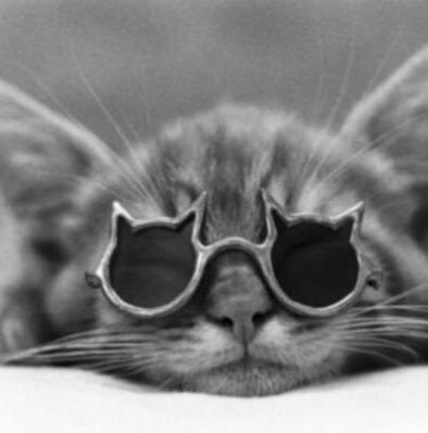 το γατί
